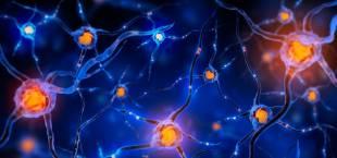 Какие витамины для нервной системы купить